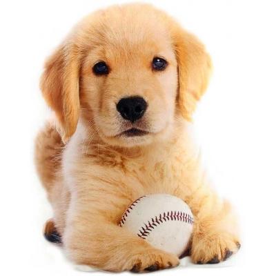 Polštářek ve tvaru zvířátka 36x20cm fotopotisk štěně s míčkem
